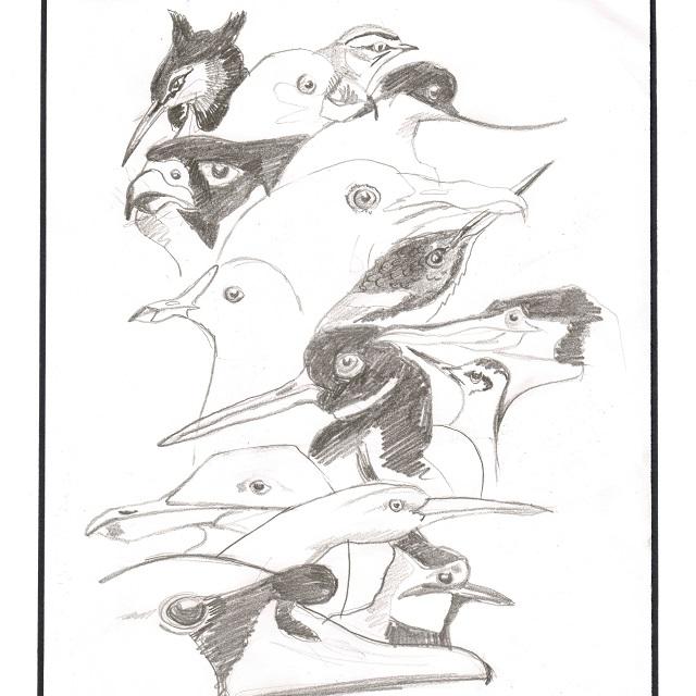 15 vogels 12 januari 2016