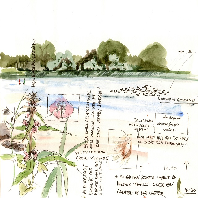 polder arkemheen 30 juni 2016