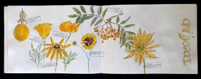 Flora Coloris