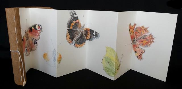 vlinders van het hogeland